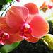 Just Peachy! (Explored)