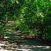 Woodland walk (2)