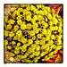 ⊹⊱✿ ❤ Bouquet mit Herbstblumen  ✿⊰⊹