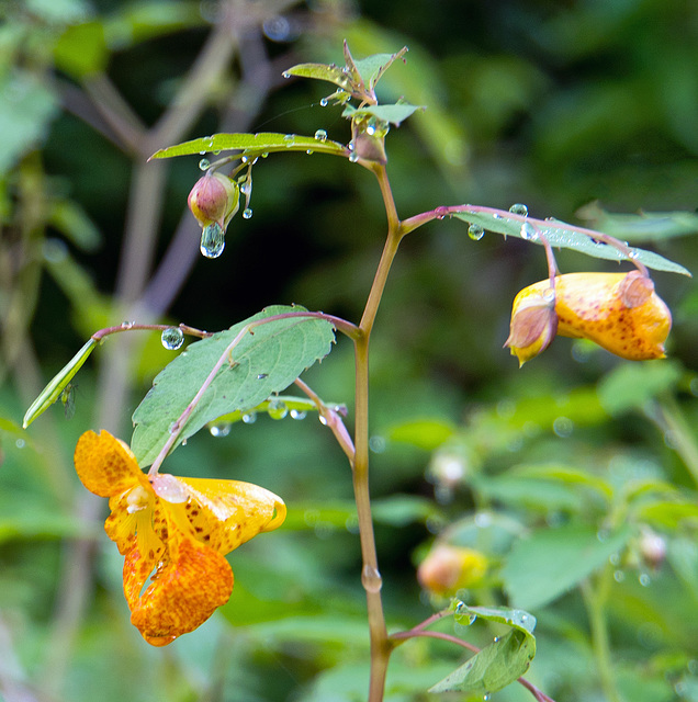 Wildflowers and raindrops