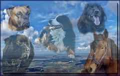 VICTOIRE: La France a ENFIN RECONNU le statut juridique de l'animal ! /  Victory! France FINALLY RECOGNIZED the legal status of the animal!