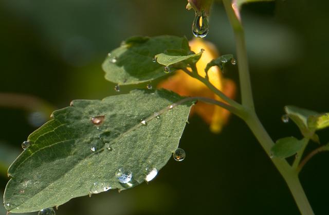 Raindrop lenses