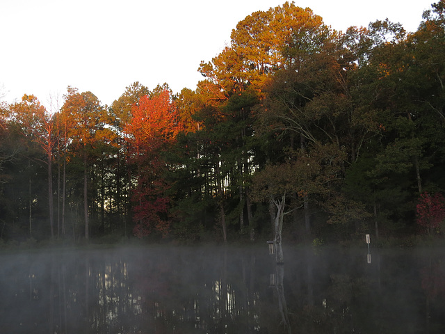 Foggy sunrise on the pond