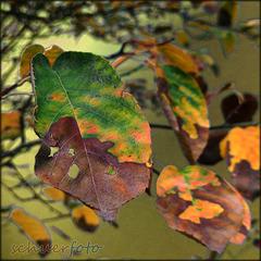 Früher Herbst durch Hitze