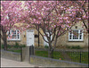 Cowley Road blossom