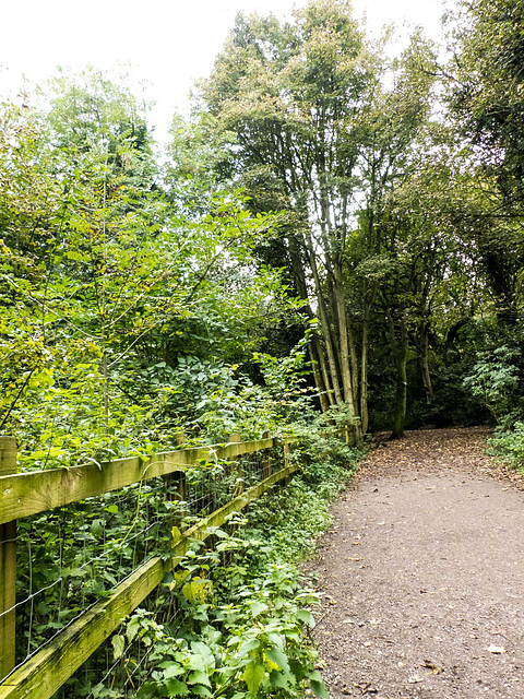 Woodland walks (1)