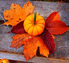 10 Der Herbst