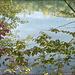 Blick durch die Zweige auf das Wasser