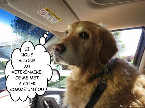 Ipernity photo chien veterinaire humour by danielle - Animaux humoristiques ...