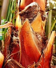 Palm base