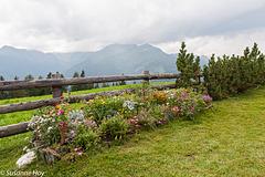 Blumenzaun - Flower Fence (PiP)