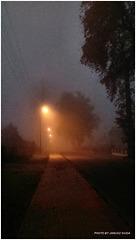 Autumn mist...