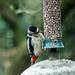 Woodpecker (3)