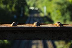 Luces, sombras y herrumbre sobre las vías del tren