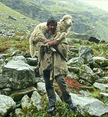 The Lonely Shepherd