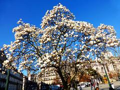 PT - Porto - Springtime in February