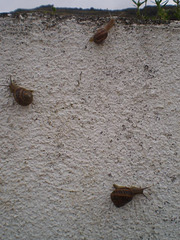 Snails on a wall.