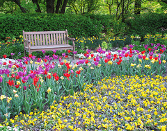 Sit Among the Tulips