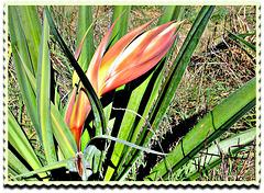 Flax Flower.