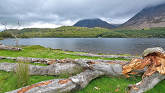 Lakeside fallen tree
