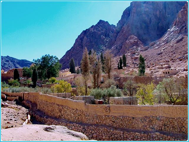 SINAI : dopo 3 ore di viaggio nel deserto eccoci arrivati nell'oasi del monastero di Santa Caterina
