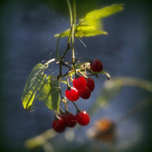 Fruit défendu....