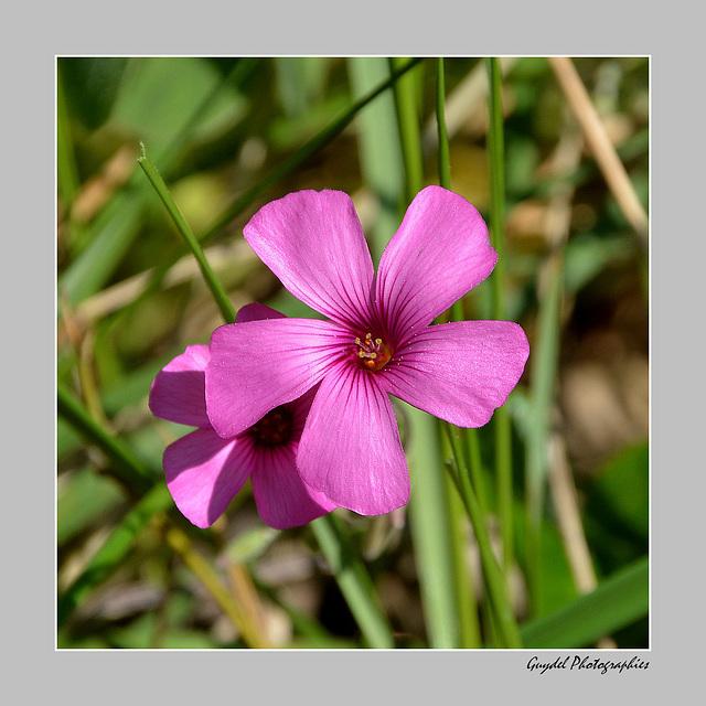 Fleurs de Talus ...