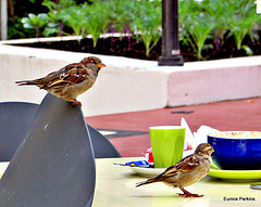 Visitors To The Cafe.