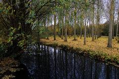 La rivière Poulain , à Morancez ( 28 )