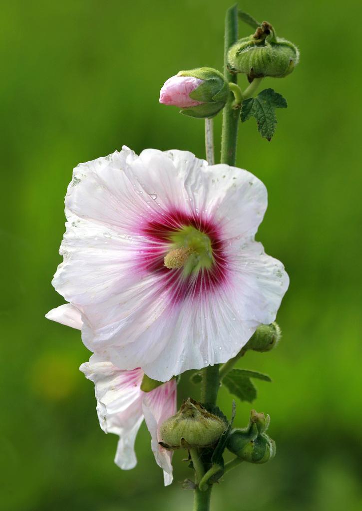 Une fleur par jour.... - Page 11 45427956.552bf0dd.1024