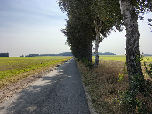 Auf dem Weg nach Sauensiek // -allee 6547