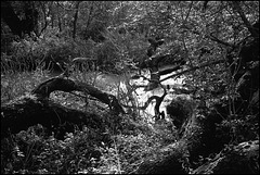 Ditchwater near Kew.