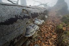 fog path