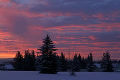 Alberta Winter Sunrise