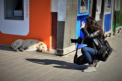 Üsküdar - Photographing the dog!