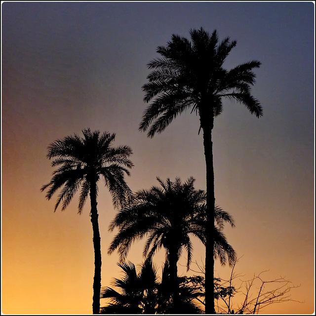 LUXOR : con questa immagine si conclude l'album sull'Egitto