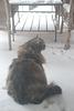 snow kitten-2