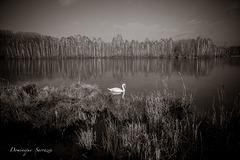 L'étang d'épisy