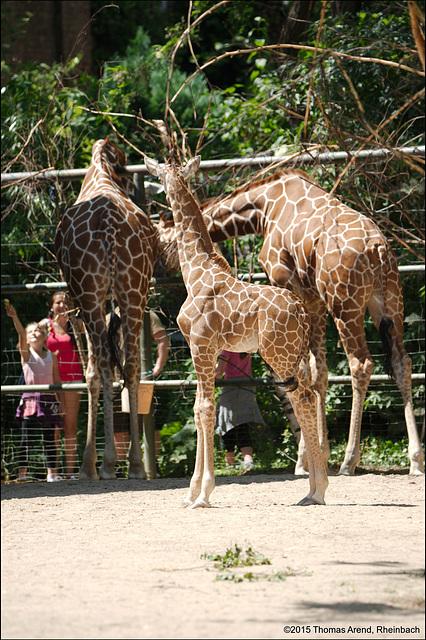 Kölner-Zoo-0064