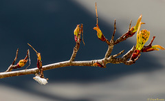 Baum vorm Fenster: 4 Tage weiter, kleine Fortschritte (PiP)