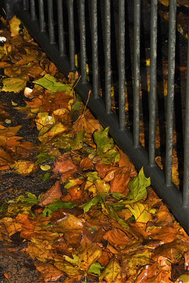 Leaves at the foot of a fence!
