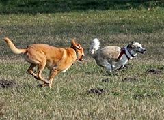 Spiel zwischen fremden Hunden