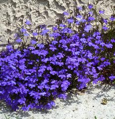 Une touche de violet / Purple touch