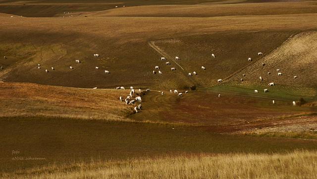 Pian Grande mit den weißen Rindern