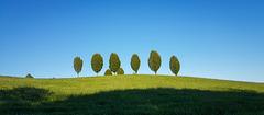 Lohmar - Wiese mit Bäumen