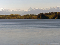 LAC DE L'AYGUELONGUE
