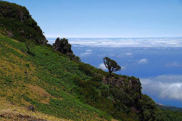 Baum über den Wolken