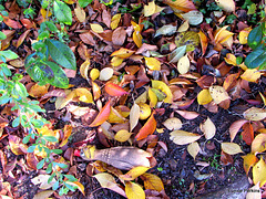 Forlorn In The Leaves.