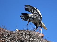 Landung auf dem Nest