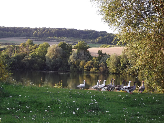 Aux étangs de Nesle-Normandeuse, Normandie, France